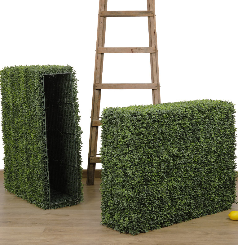 special boxwood and more...