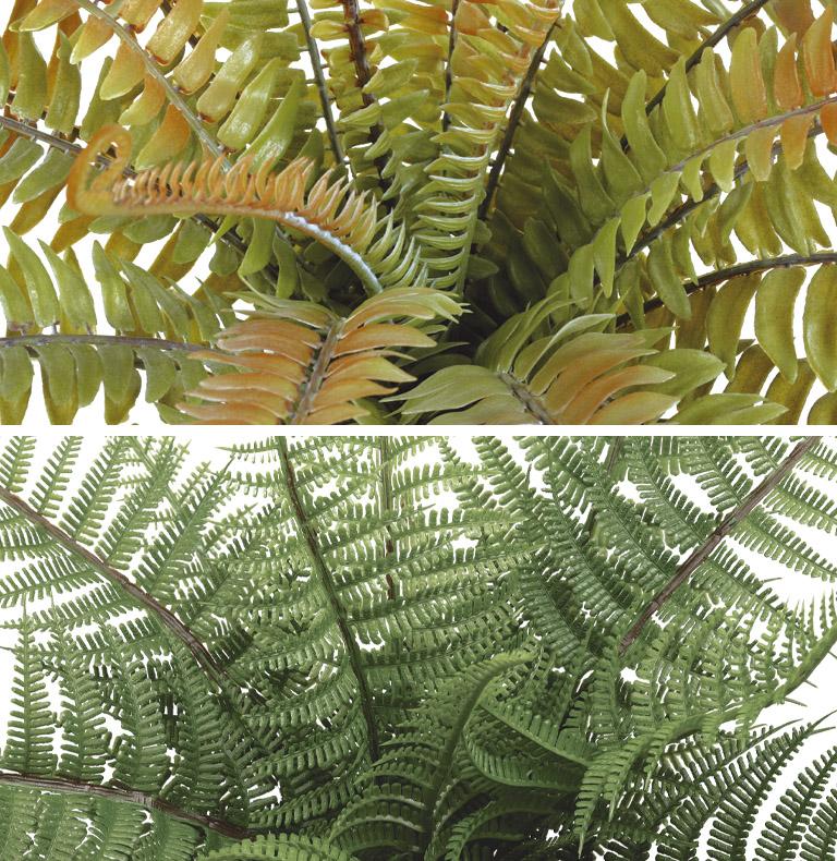 Special Ferns