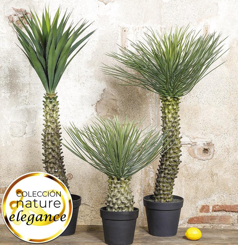nature elegance plants
