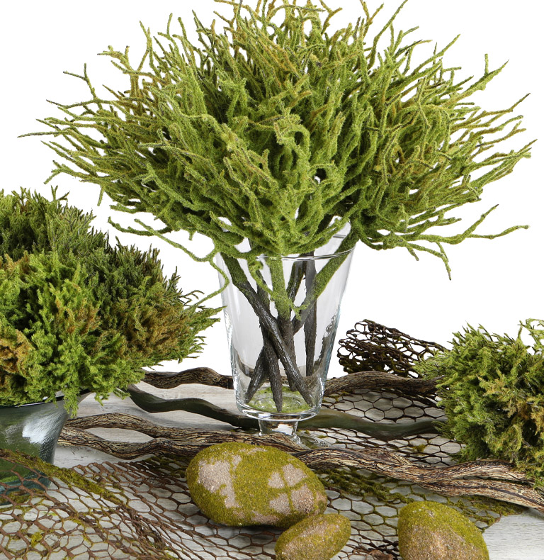 moss collection